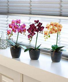 Orquídeas de colores