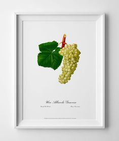 Botanical geclee art print Grape vintage picture antique poster home poster wall decor image wall print cubicle decor drawing watercolor art by GecleeArtStudio on Etsy