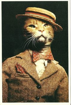 1982 Alfred Gescheidt Cat Postcard, American Cat Card, Kitten, Meow, Barber Shop Cat, Bow Tie Kitten, Classy Cat