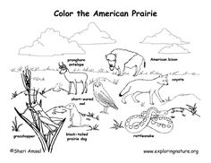 Desert Detailed Coloring Page Exploring Nature Educational