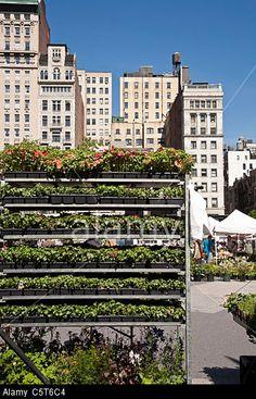 Union Square Greenmarket, NYC