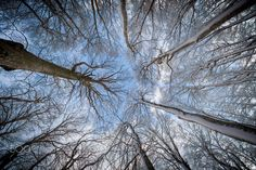 Abstract Forest by Deni Peršić on 500px