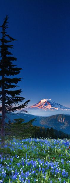 Mount Adams, Gifford Pinchot ,National Forest, Washington State, USA. * * THE WORLD BREAKS EVERYONE, BUT AFTERWARDS, SOME ARE STRONGER.  ~ Hemingway