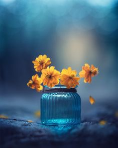 "Ashraful Arefin (@monsieur_arefin) on Instagram: ""Deep in your wounds are seeds, waiting to grow beautiful flowers.. Hello from the city of joy,…"""