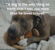 """Why not replace the word """"thing"""" withthe saying """"THE ONLY ONE""""_I am 100% sure that most people agree with me that a dog is NOT a thing ! #PitBullQuotes"""
