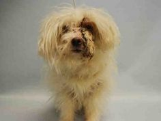 SUPER URGENT 03/19/16 Manhattan Center SNOW – A1067957 NEUTERED MALE, WHITE, MALTESE MIX, 10 yrs OWNER SUR – EVALUATE, NO HOLD Reason PET HEALTH Intake condition GERIATRIC Intake Date 03/18/2016, From NY 10460, DueOut Date 03/18/2016