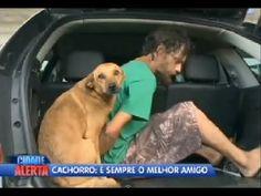Cachorro preso em flagrante (sinceramente, cortou o coração)
