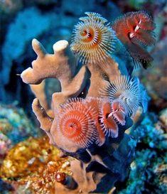 18 criaturas marinhas (parte 2) ~ Hadouken!