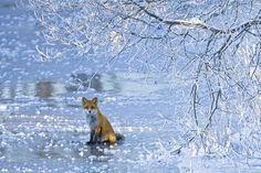 http://cdn.london-insider.co.uk/wp-content/uploads/2010/01/Veolia-Wildlife-Photographer-of-Year-2009-Picture.jpg
