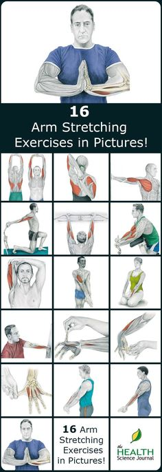 We have a new entry into our stretching series. Today we'll present 16 illustrations of arm stretching exercises, showing you exactly which muscle you are exercising. By demonstrating where on your body you should feel the highest tension, we hope to help