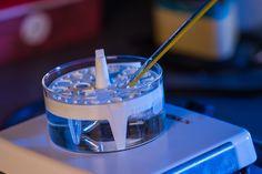溶けて骨に置き換わる「骨組織再生ゲル」、米大学が開発。体温で固化・体内酵素で分解 - Engadget Japanese