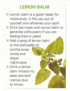 Lemon Balm - this stuff really takes off. Don't be surprised if it pops up somewhere else in your yard after you plant it...
