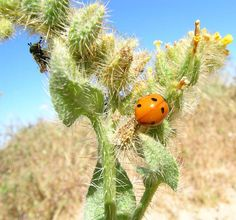 Desert Insects | Recent Photos The Commons Getty Collection Galleries World Map App ...