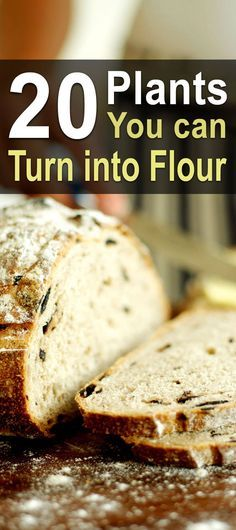 Wheat is a staple of almost everyone's diet, but it can be difficult to grow. Thankfully, there's a plethora of other plants that can be made into flour.