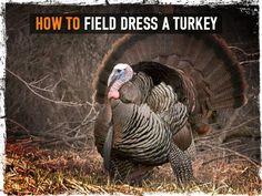 How To Field Dress A Turkey