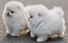 3 Amazing Cute Puppies