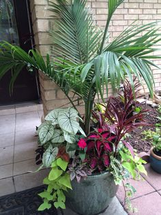 Majesty Palm surrrounded by chocolate cherry coleus, calladiums, sweet potato vine and assorted varieties Tropical Landscaping, Tropical Garden, Front Yard Landscaping, Outdoor Planters, Garden Planters, Outdoor Gardens, Pool Plants, Indoor Plants, Container Plants