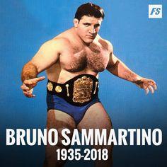My Favorite Wrestler. Wrestling Stars, Wrestling Divas, Wwe Women's Championship, Bruno Sammartino, Wwe Pictures, Wwe Wallpapers, Wrestling Superstars, Wwe Womens, Sports Figures