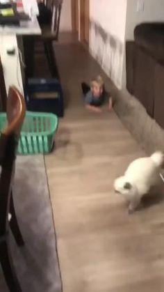 El gato le quería hacer la matación Dogs, Animals, Gatos, Te Quiero, Animales, Animaux, Pet Dogs, Doggies, Animal