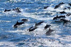 Los cañones submarinos del Golfo de León acogen una cuarta parte de las especies registradas en el Mediterráneo | SoyRural.es