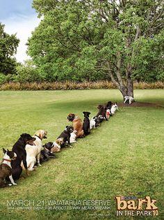 We have Porto Potties, dogs have the Pee Tree...