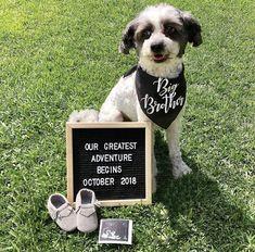 Pregnancy Announcement Dog Bandana