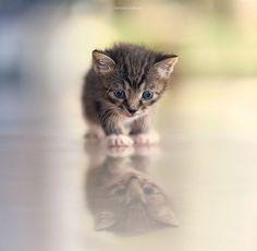 Sweet tiny baby...