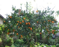 Growing fruit trees in the garden can provide ripe, fresh fruit for your family's eating pleasure. These garden fruit trees are also a beautiful addition.