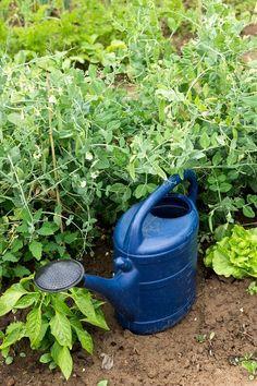 Saisongarten mit Kindern - wir lieben die Gartenzeit Canning, Tips And Tricks, Kids, Home Canning, Conservation