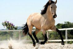 Roça lirios do campo.: Nunca devemos obrigar um cavalo a confiar em nós. ...
