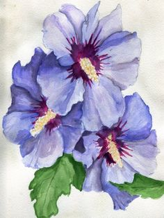 """havekat: """" Blue Menage Watercolor and Gouache On Cotton Paper 2017, 9″x 12″ Blue Satin Rose of Sharon, Hibiscus syriacus """""""