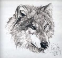 Fluffy, detailed wolf drawing