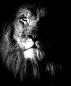 Top 10 Photos of Big Cats: Lion (Panthera Leo) Great Quotes, Quotes To Live By, Me Quotes, Motivational Quotes, Inspirational Quotes, Lion Quotes, Aslan Quotes, Motivational Thoughts, Amazing Quotes
