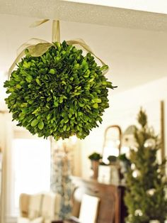 How to Make a Boxwood Kissing Ball- A Christmas tradition, the kissing ball, can be made out of more than just mistletoe. Use preserved boxwood sprigs, magnolia leaves or even fresh evergreens to create this holiday party decoration. Topiary Plants, Boxwood Topiary, Topiary Trees, Boxwood Wreath, Topiaries, Christmas Topiary, Christmas Wreaths, Christmas Decorations, Holiday Decorating