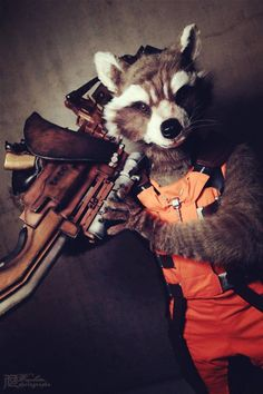 Rocket Raccoon from Guardians of the Galaxy by Shoko and Jérôme Cosplay, photo… - MARVEL Thor Cosplay, Epic Cosplay, Amazing Cosplay, Cosplay Outfits, Cosplay Costumes, Captain America Cosplay, Big Hero 6, Rocket Raccoon Cosplay, Raccoon Costume