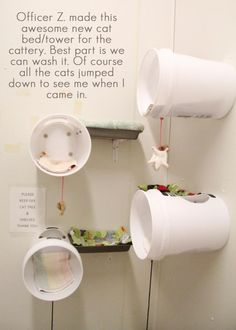 Cat beds made from food bins it looks like, nice idea for our own cattery. …