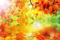 #bermonths #yay #finally #sooversummer #helloseptember #september #fall #autumn #myfavorite #trees #colorful #leaves #wallpapers #android