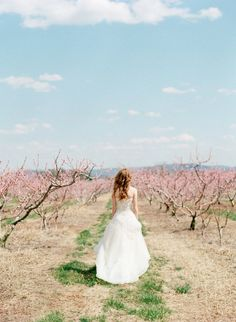 peach orchard bridal session, dress from @Fabulous Frocks of Alexandria www.jodimillerphotography.com