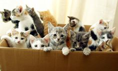A box full of kittens. nothing in the history of ever has EVER been this cute. EVER
