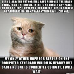 Dear diary... #catoftheday