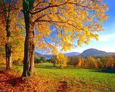 Vermont!!!!!! :))