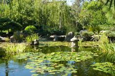 Himejii Japanese Gardens. South Terrace, Adelaide. South Australia.