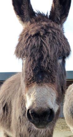 Alfie @ Island Farm #Donkey Sanctuary