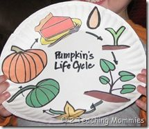 Pumpkin Life Cycle craft using my printable found here: http://atoztea.ch/1P3mdZk