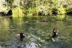Site Falando de Viagem - Recanto Ecologico Rio da Prata - Jardim - Bonito - MS - Brasil