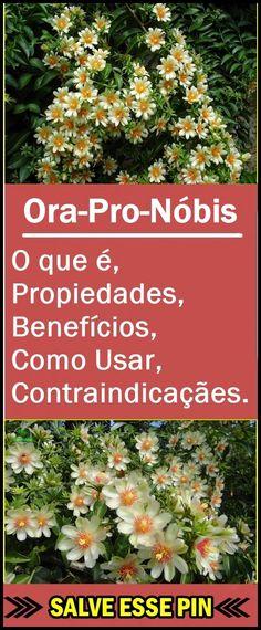 Ora-Pro-Nóbis – O que é, Benefícios e Como Usar  #ora-pro-nóbis, #ora-pro-nóbistemespinhos, #ora-pro-nóbiscactos, #ora-pro-nóbisreceitas, #ora-pro-nóbisserveparaquê, #ora-pro-nóbisparaanemia, #ora-pro-nóbispropriedades, #ora-pro-nóbisoqueé, #benefíciosdeora-pro-nóbis, #folhadeora-pro-nóbis, #dicasdesaude #saudedica #beleza #mulher #natural #caseiro #receita #receitasfit  #receitacaseira #receitafácil #tuasaude Ora Pro Nobis Planta, Kefir, Medicine, Health, Plants, Diet To Lose Weight, Rose Milk, Recipes With Vegetables, Healthy Tips