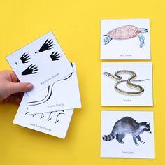 animal tracks printable memory game for kids to learn Printable Games For Kids, Printable Animals, Memory Games For Kids, Animals Of The World, Animals For Kids, Animal Tracks, Survival Skills, Survival Prepping, Animal Cards