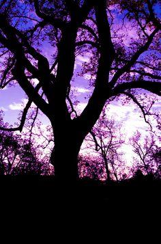 Silhouette by Damascena [Purple tree]