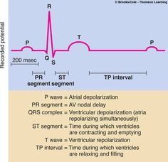 deflection point generated by ventricular repolarization | wave - atrial depolarization