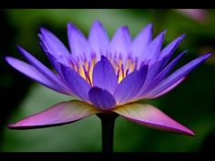Living Carefree - A Meditation with Deepak Chopra - YouTube